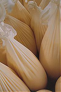 Bags of moromi from which sake is being drip-pressed